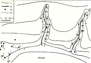 Рис. 4. Парцеллярные группировки в ленточных поселениях больших песчанок в сухой долине Даулен (северо-западное Приаралье): I—горизонтали (через 2 м) II—тальвег долины и водоемы; III — норы песчанок (арабские цифры — число живущих в них зверьков); IV — тропки, соединяющие входы и норы