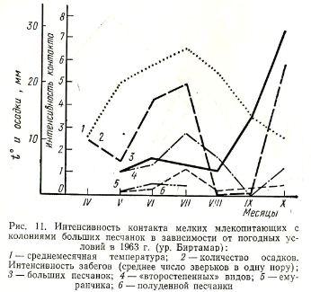 Рис. 11. Интенсивность контакта мелких млекопитающих с колониями больших песчанок в зависимости от погодных условий в 1963 г. (ур. Биртамар): 1 — среднемесячная температура; 2 — количество осадков. Интенсивность забегов (среднее число зверьков в одну нору); 3 — больших песчанок; 4 — «второстепенных» видов; 5 — емуранчика; 6 — полуденной песчанки